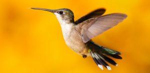 humming bird impact in online marketing